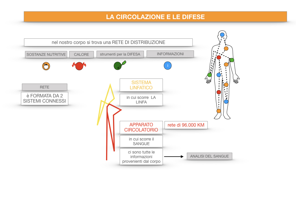 13. CIRCOLAZIONE E DIFESE_SIMULAZIONE.020