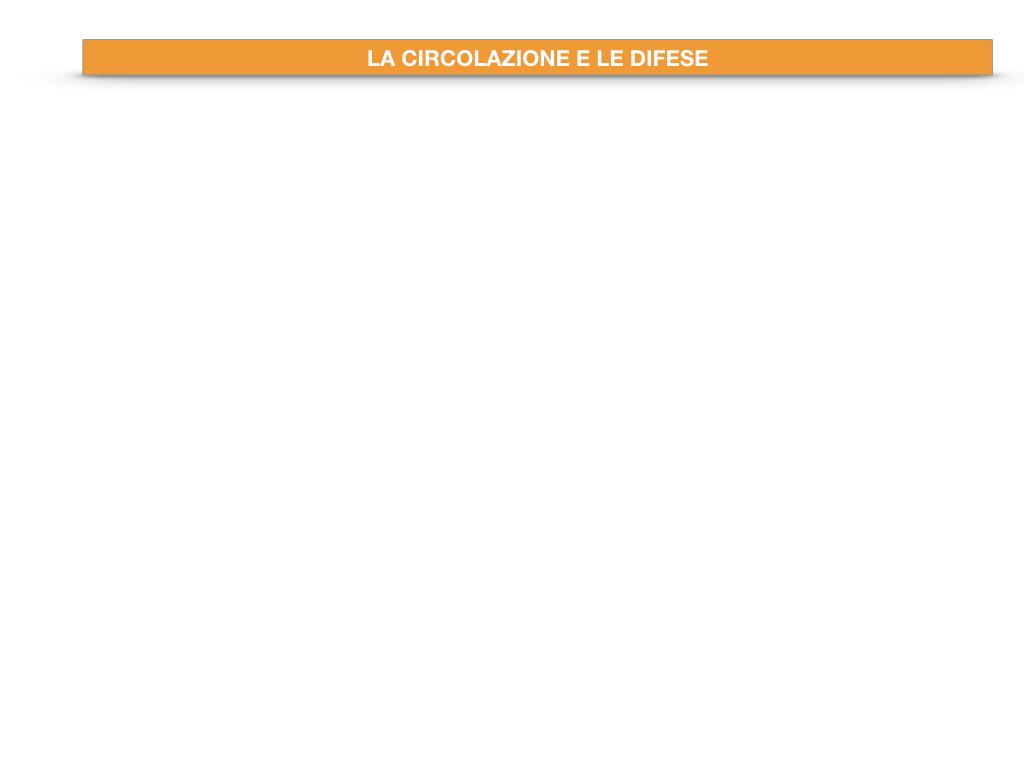 13. CIRCOLAZIONE E DIFESE_SIMULAZIONE.021