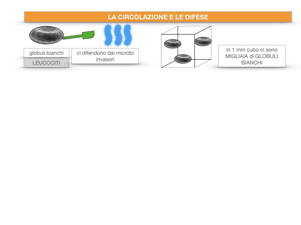 13. CIRCOLAZIONE E DIFESE_SIMULAZIONE.025