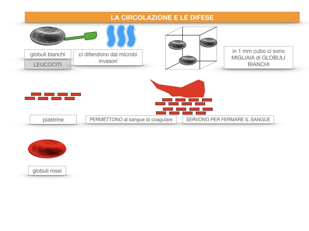 13. CIRCOLAZIONE E DIFESE_SIMULAZIONE.030