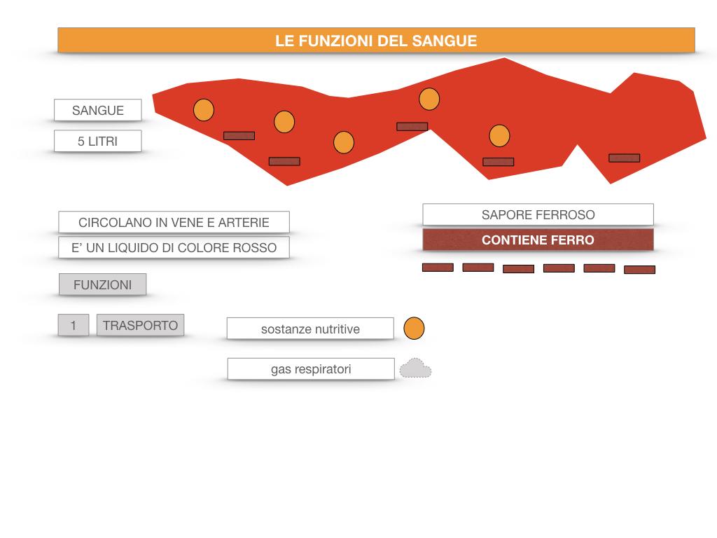 13. CIRCOLAZIONE E DIFESE_SIMULAZIONE.049