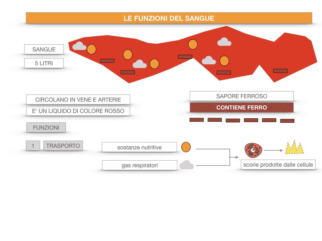 13. CIRCOLAZIONE E DIFESE_SIMULAZIONE.053