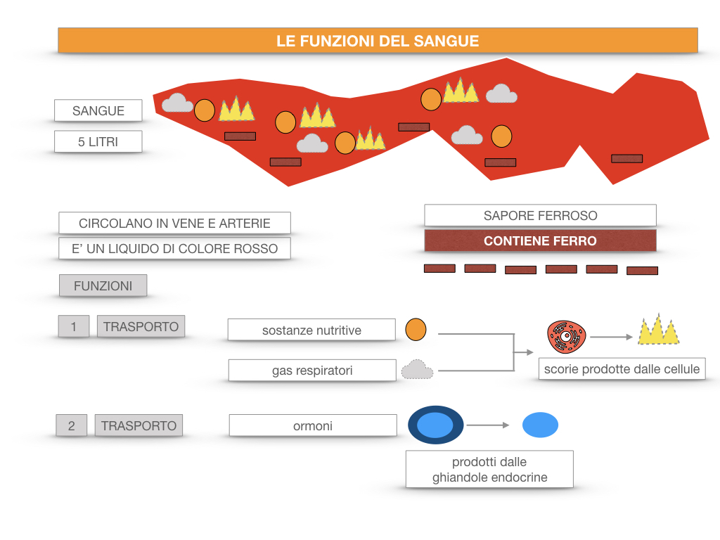 13. CIRCOLAZIONE E DIFESE_SIMULAZIONE.057