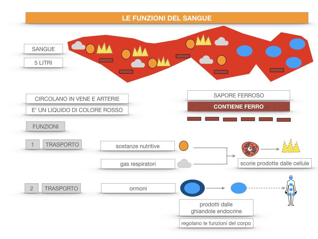 13. CIRCOLAZIONE E DIFESE_SIMULAZIONE.059
