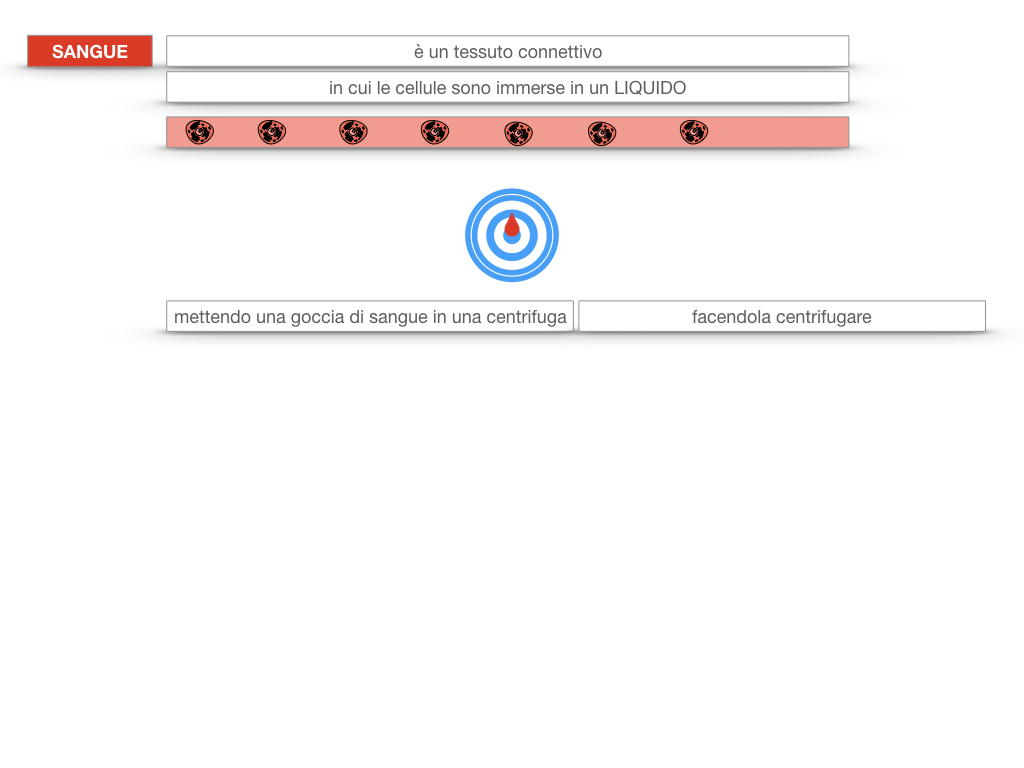 13. CIRCOLAZIONE E DIFESE_SIMULAZIONE.082