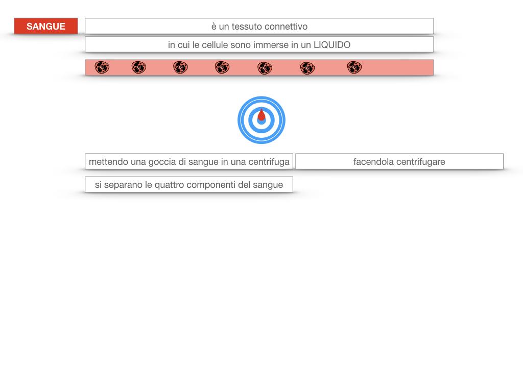 13. CIRCOLAZIONE E DIFESE_SIMULAZIONE.083