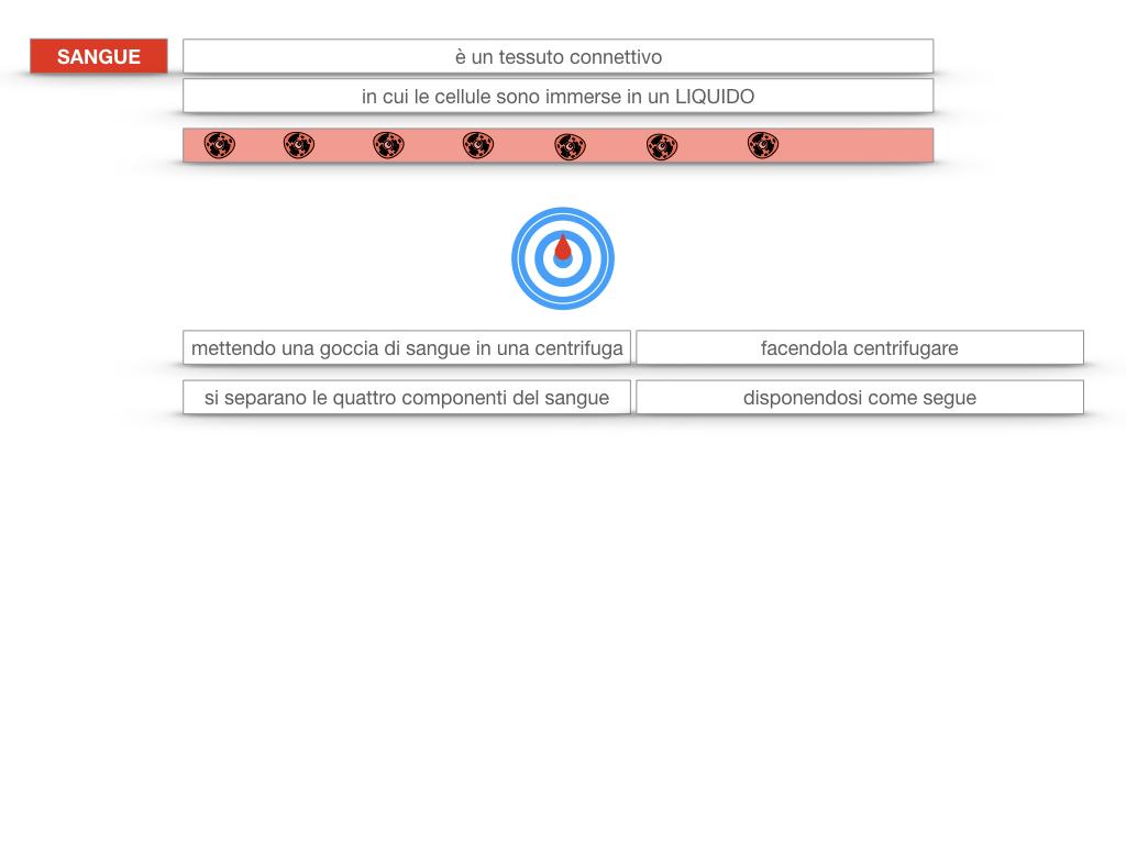 13. CIRCOLAZIONE E DIFESE_SIMULAZIONE.084