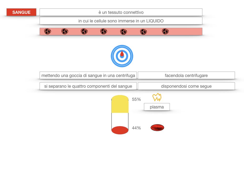 13. CIRCOLAZIONE E DIFESE_SIMULAZIONE.087