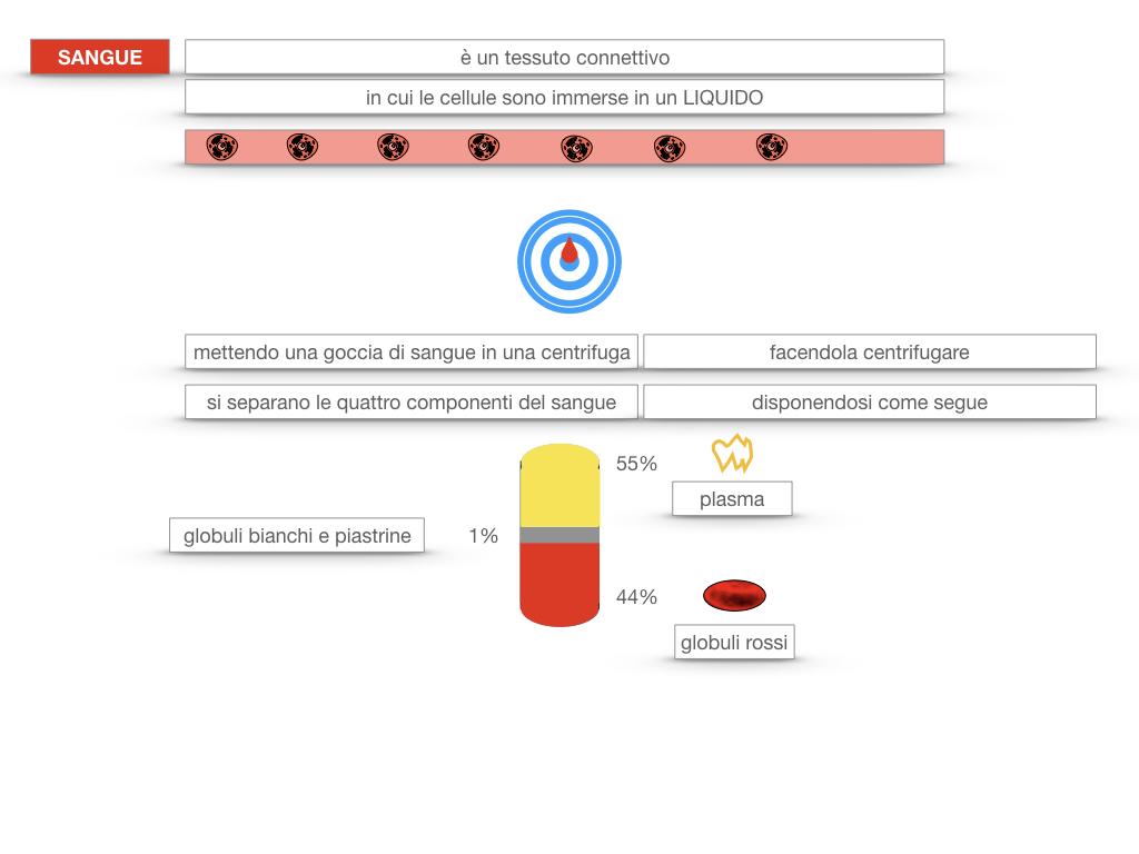 13. CIRCOLAZIONE E DIFESE_SIMULAZIONE.090