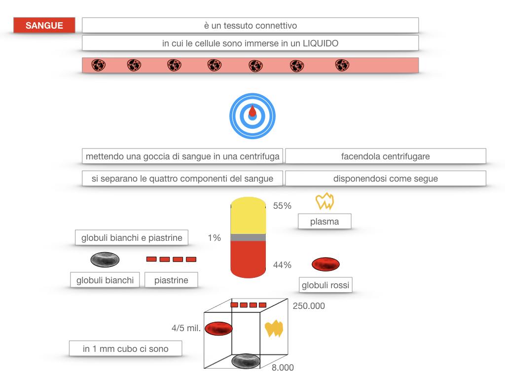 13. CIRCOLAZIONE E DIFESE_SIMULAZIONE.097