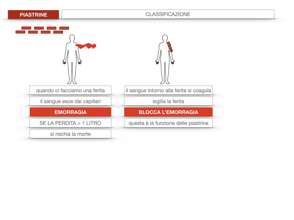 16. PIASTRINE CELLULE STAMINALI_SIMULAZIONE.013