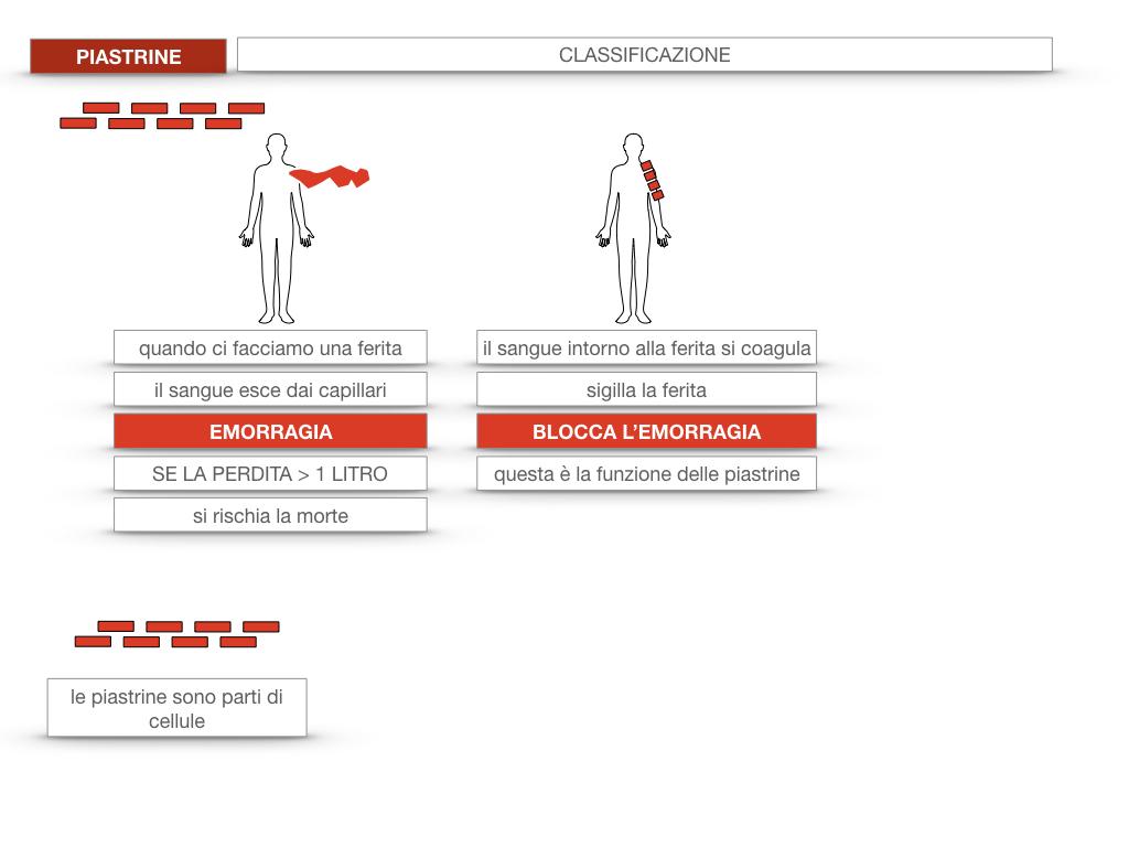16. PIASTRINE CELLULE STAMINALI_SIMULAZIONE.014