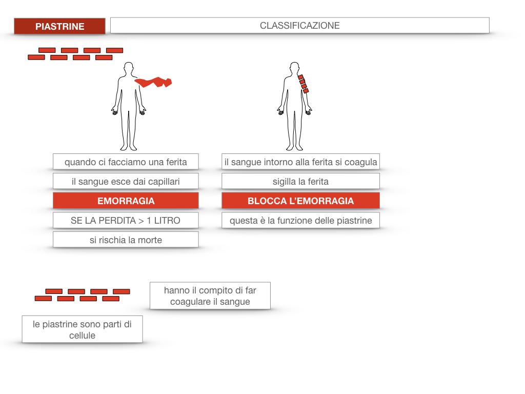16. PIASTRINE CELLULE STAMINALI_SIMULAZIONE.015