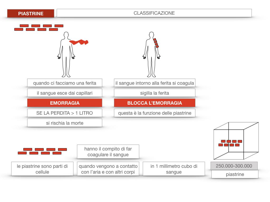 16. PIASTRINE CELLULE STAMINALI_SIMULAZIONE.018