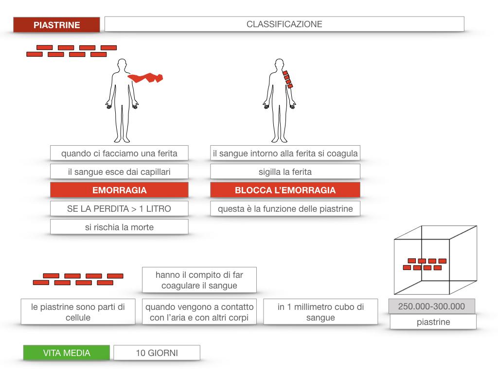 16. PIASTRINE CELLULE STAMINALI_SIMULAZIONE.019