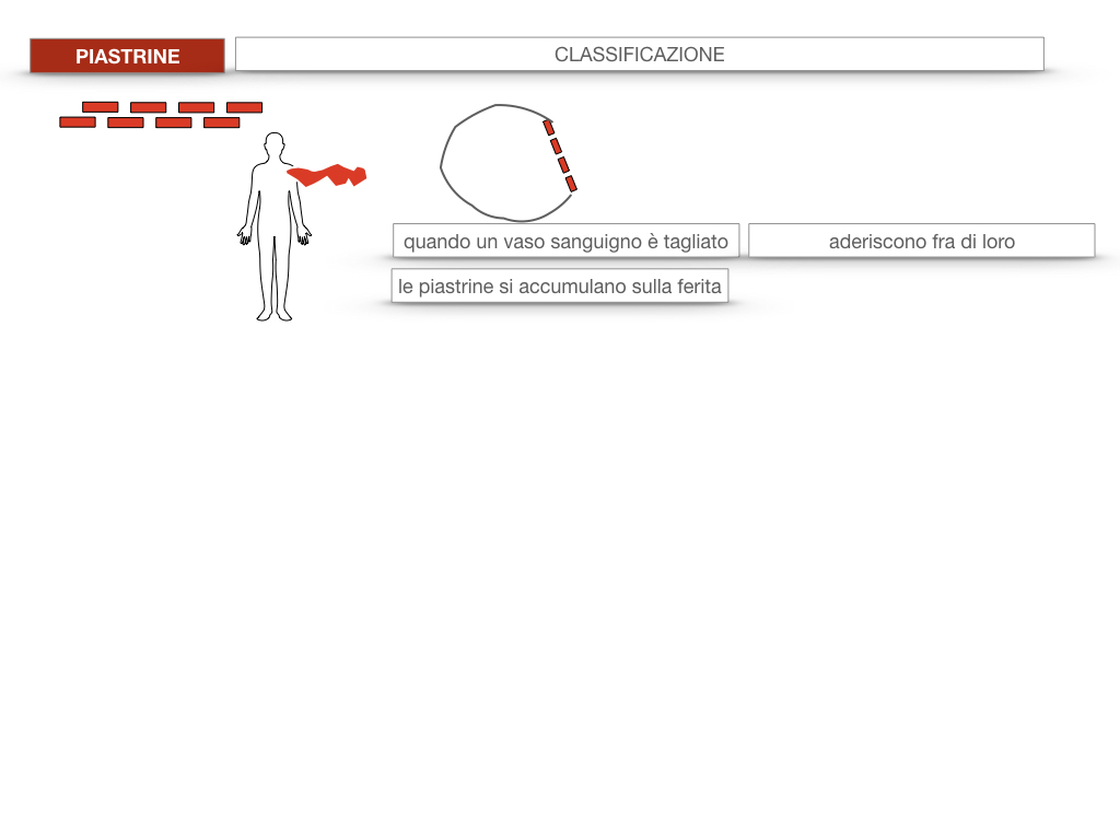 16. PIASTRINE CELLULE STAMINALI_SIMULAZIONE.024