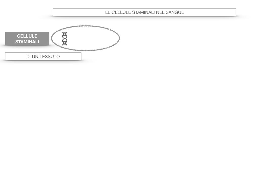16. PIASTRINE CELLULE STAMINALI_SIMULAZIONE.046