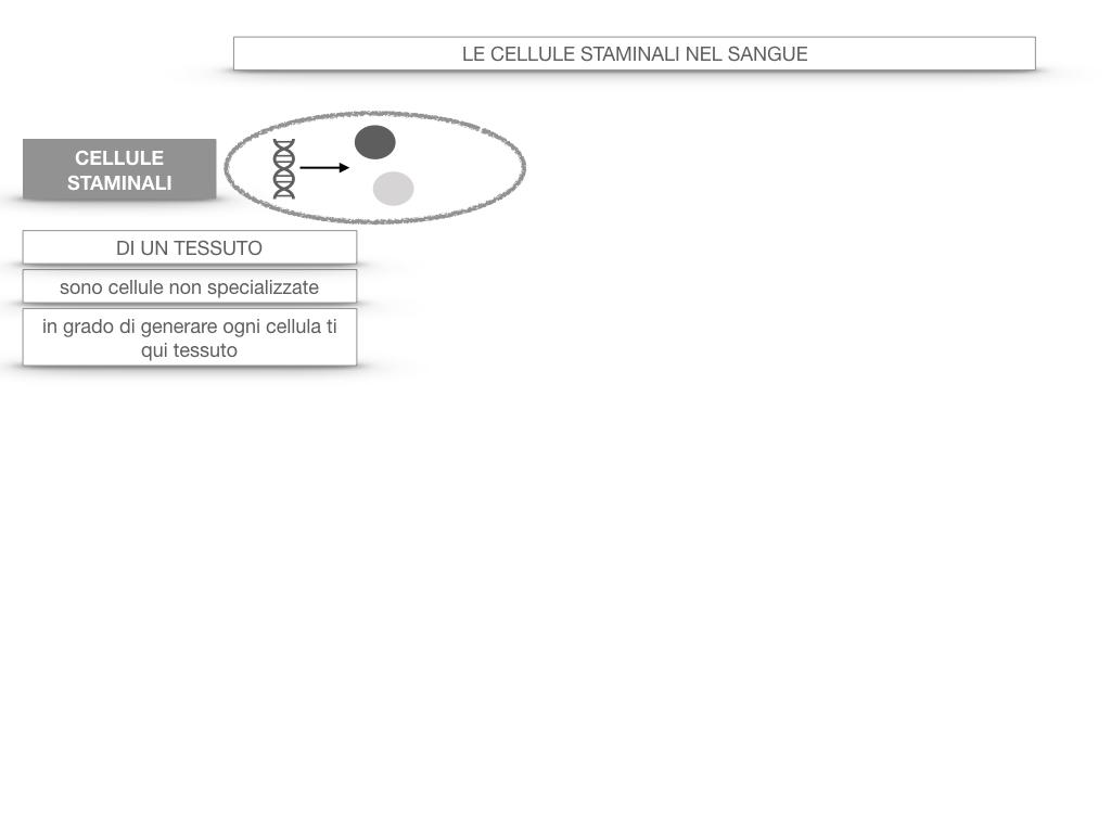 16. PIASTRINE CELLULE STAMINALI_SIMULAZIONE.049