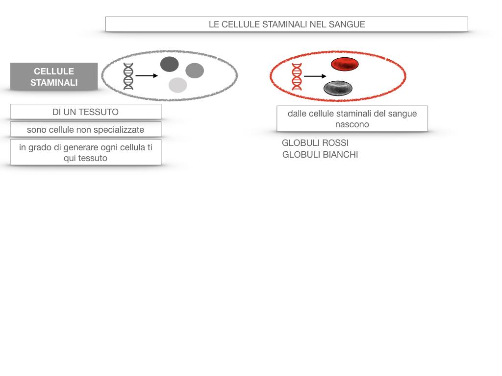 16. PIASTRINE CELLULE STAMINALI_SIMULAZIONE.055