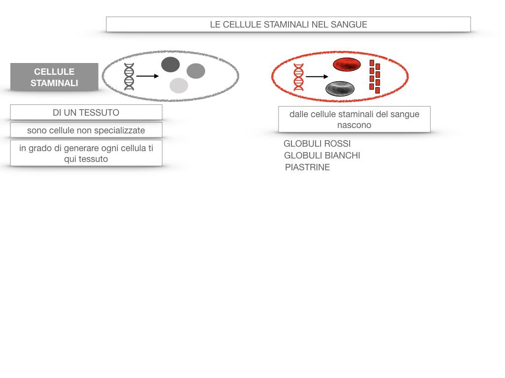 16. PIASTRINE CELLULE STAMINALI_SIMULAZIONE.056