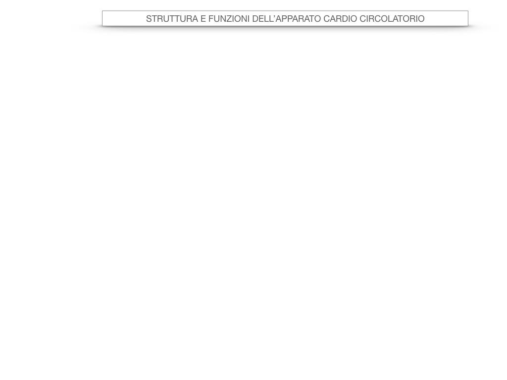 17. ORGANI APPARATO CIRCOLATORIO_SIMULAZIONE.002
