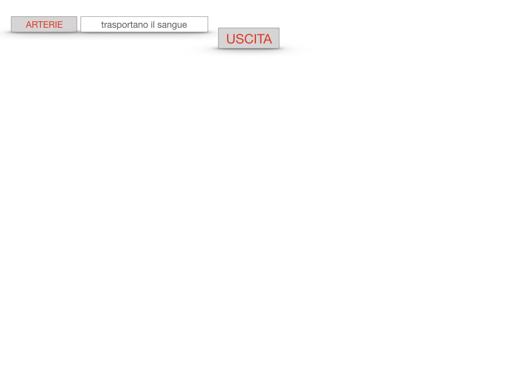17. ORGANI APPARATO CIRCOLATORIO_SIMULAZIONE.088