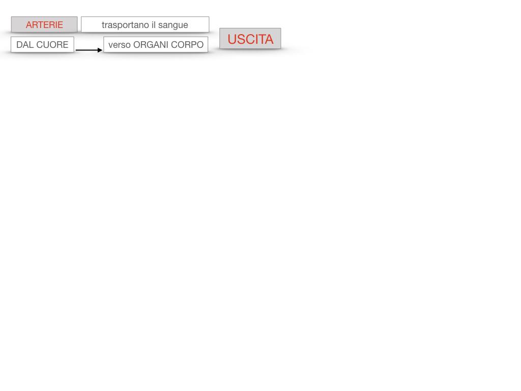 17. ORGANI APPARATO CIRCOLATORIO_SIMULAZIONE.089