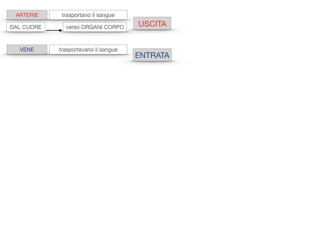 17. ORGANI APPARATO CIRCOLATORIO_SIMULAZIONE.091