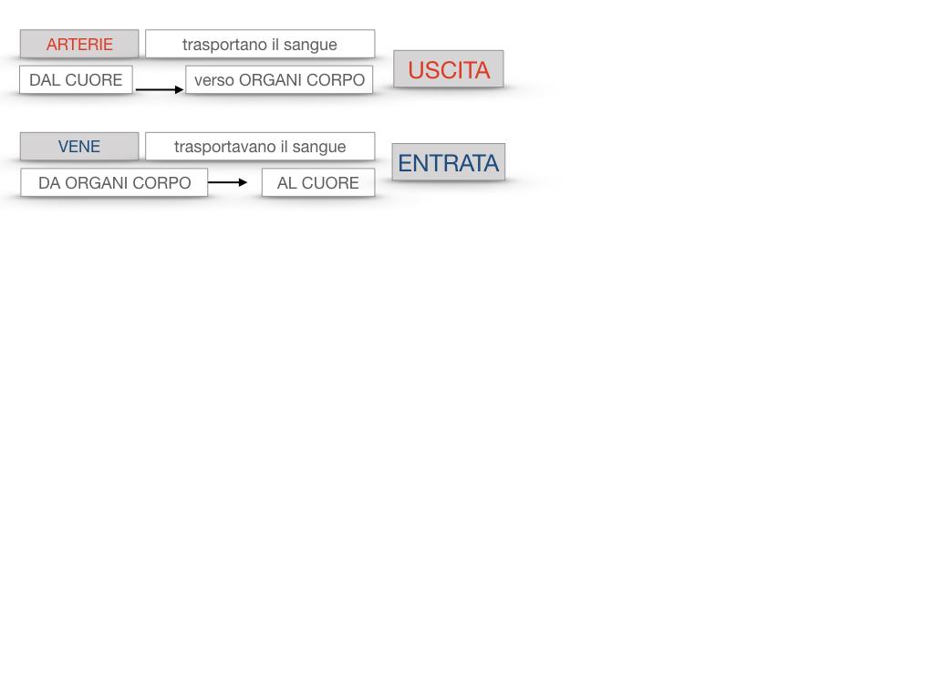17. ORGANI APPARATO CIRCOLATORIO_SIMULAZIONE.092