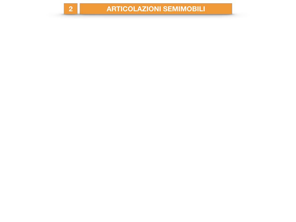 10. LE ARTICOLAZIONI_SEMIMOBILI_FISSE_SIMULAZIONE.001