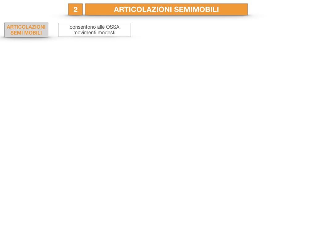 10. LE ARTICOLAZIONI_SEMIMOBILI_FISSE_SIMULAZIONE.002