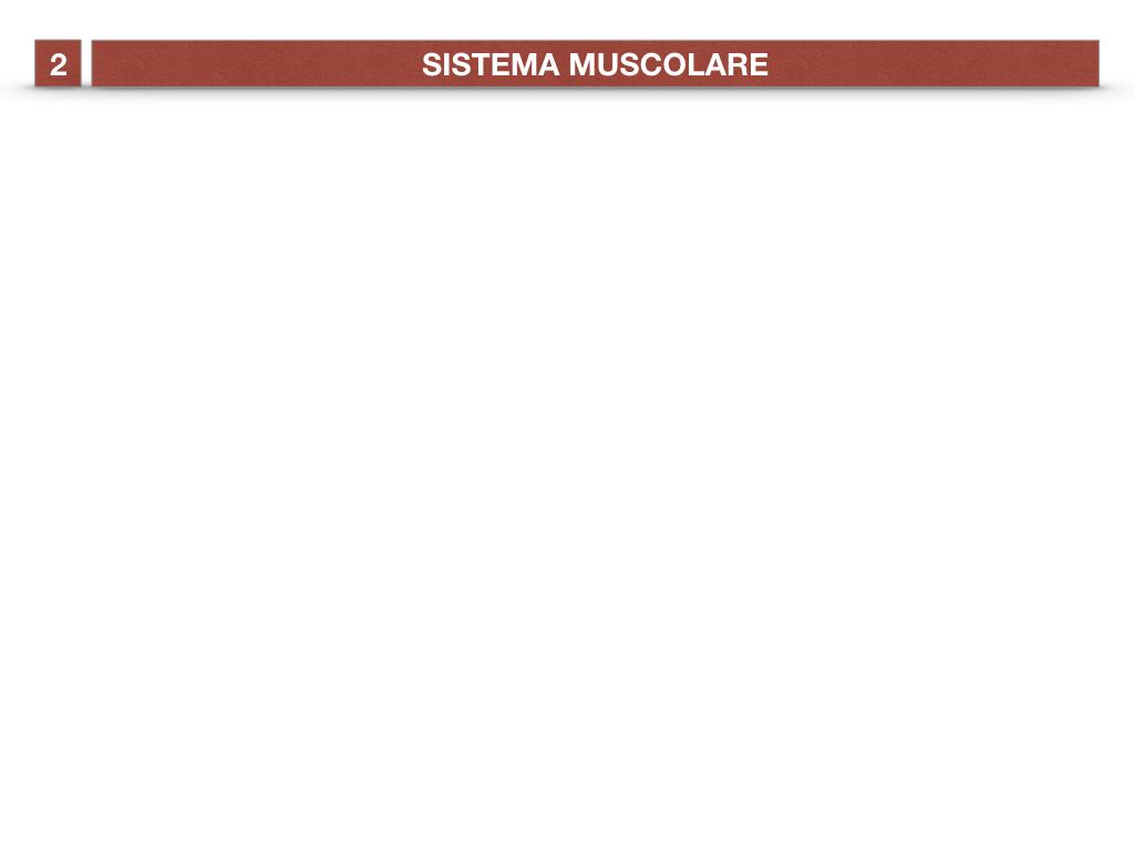 11. IL SISTEMA MUSCOLARE_PARTE1_SIMULAZIONE.001