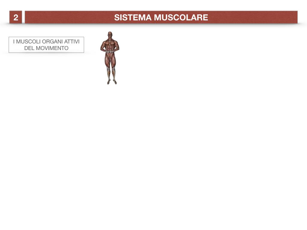 11. IL SISTEMA MUSCOLARE_PARTE1_SIMULAZIONE.002