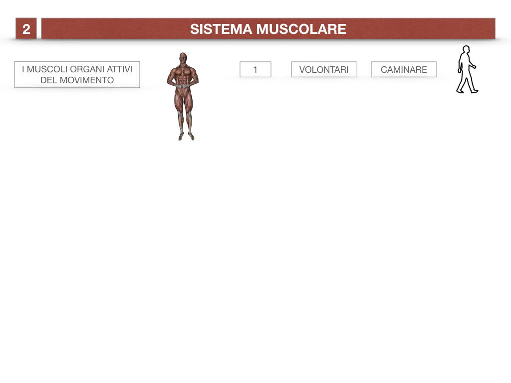 11. IL SISTEMA MUSCOLARE_PARTE1_SIMULAZIONE.004