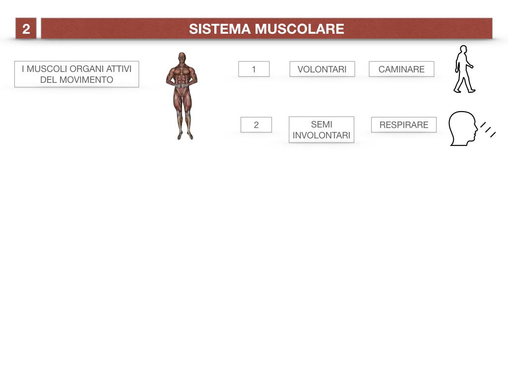 11. IL SISTEMA MUSCOLARE_PARTE1_SIMULAZIONE.006