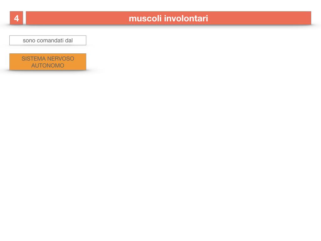 11. IL SISTEMA MUSCOLARE_PARTE1_SIMULAZIONE.063