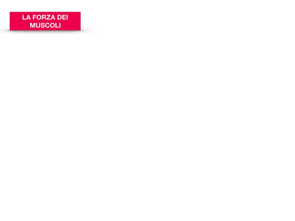 12. IL SISTEMA MUSCOLARE_PARTE2_SIMULAZIONE.067
