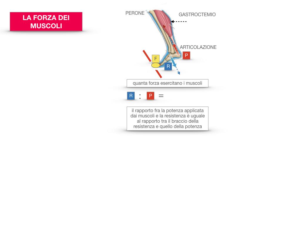 12. IL SISTEMA MUSCOLARE_PARTE2_SIMULAZIONE.071