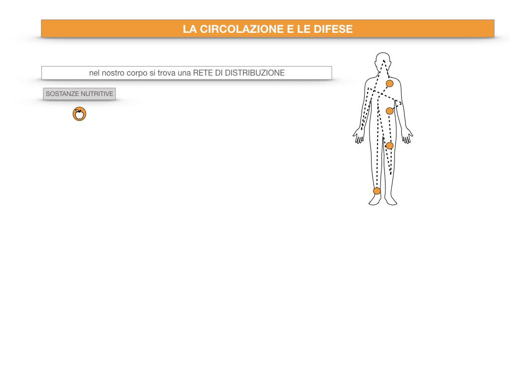 13. CIRCOLAZIONE E DIFESE_SIMULAZIONE.006