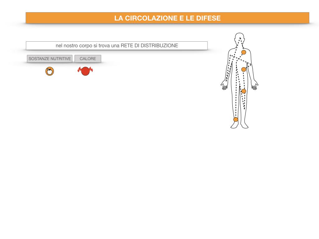 13. CIRCOLAZIONE E DIFESE_SIMULAZIONE.007