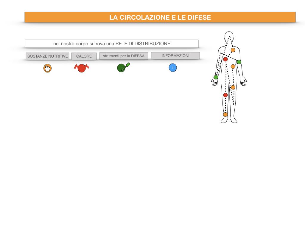 13. CIRCOLAZIONE E DIFESE_SIMULAZIONE.011