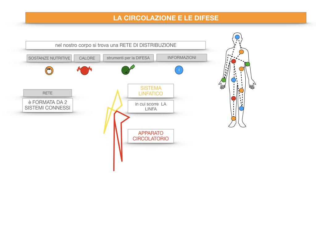 13. CIRCOLAZIONE E DIFESE_SIMULAZIONE.016