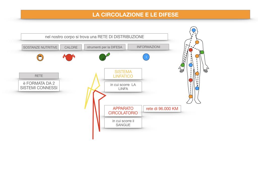 13. CIRCOLAZIONE E DIFESE_SIMULAZIONE.018