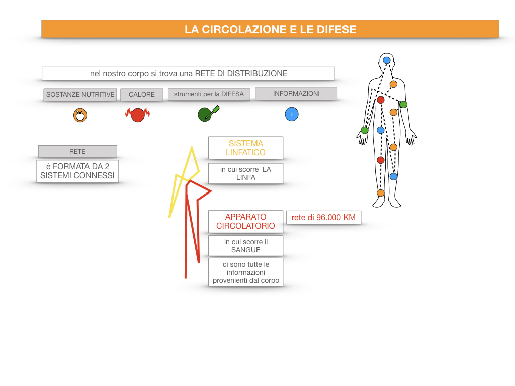 13. CIRCOLAZIONE E DIFESE_SIMULAZIONE.019