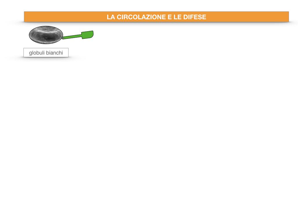 13. CIRCOLAZIONE E DIFESE_SIMULAZIONE.022