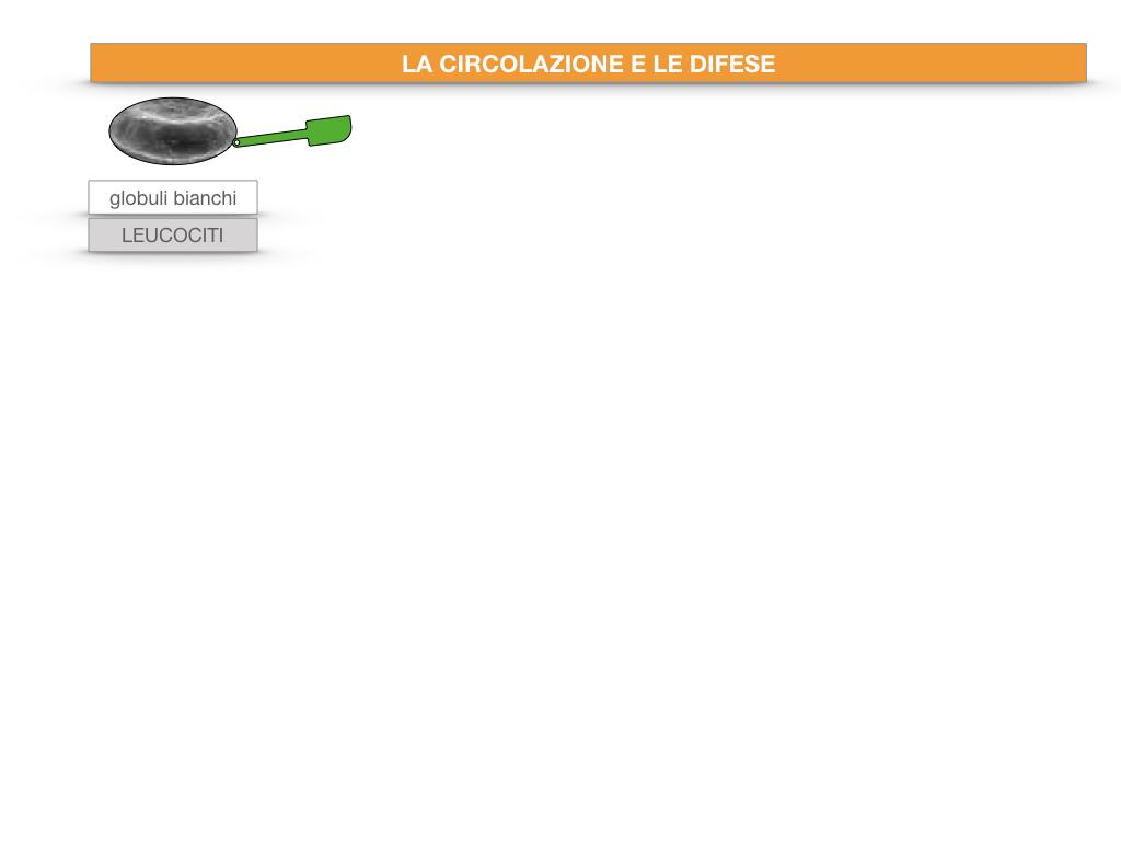13. CIRCOLAZIONE E DIFESE_SIMULAZIONE.023