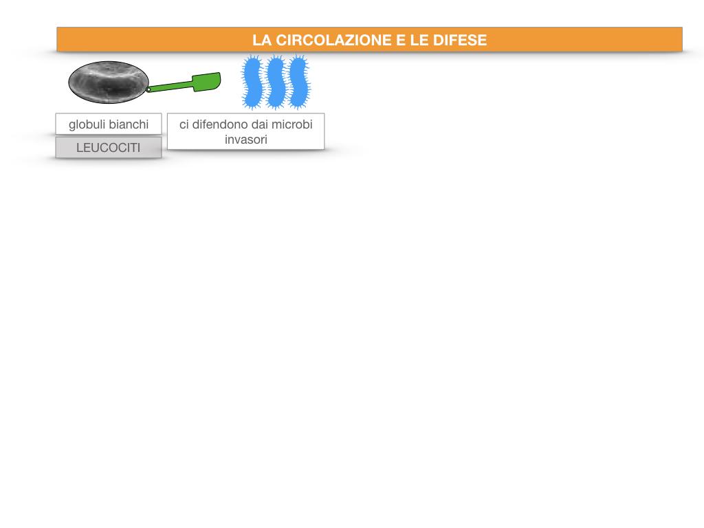 13. CIRCOLAZIONE E DIFESE_SIMULAZIONE.024