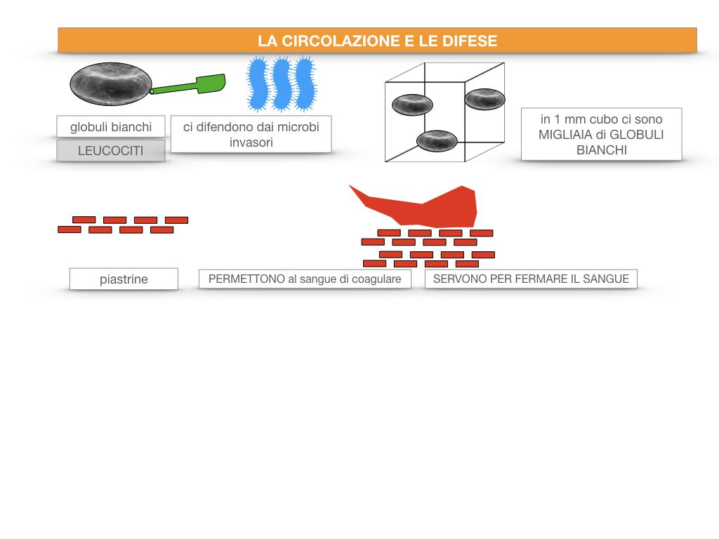 13. CIRCOLAZIONE E DIFESE_SIMULAZIONE.029