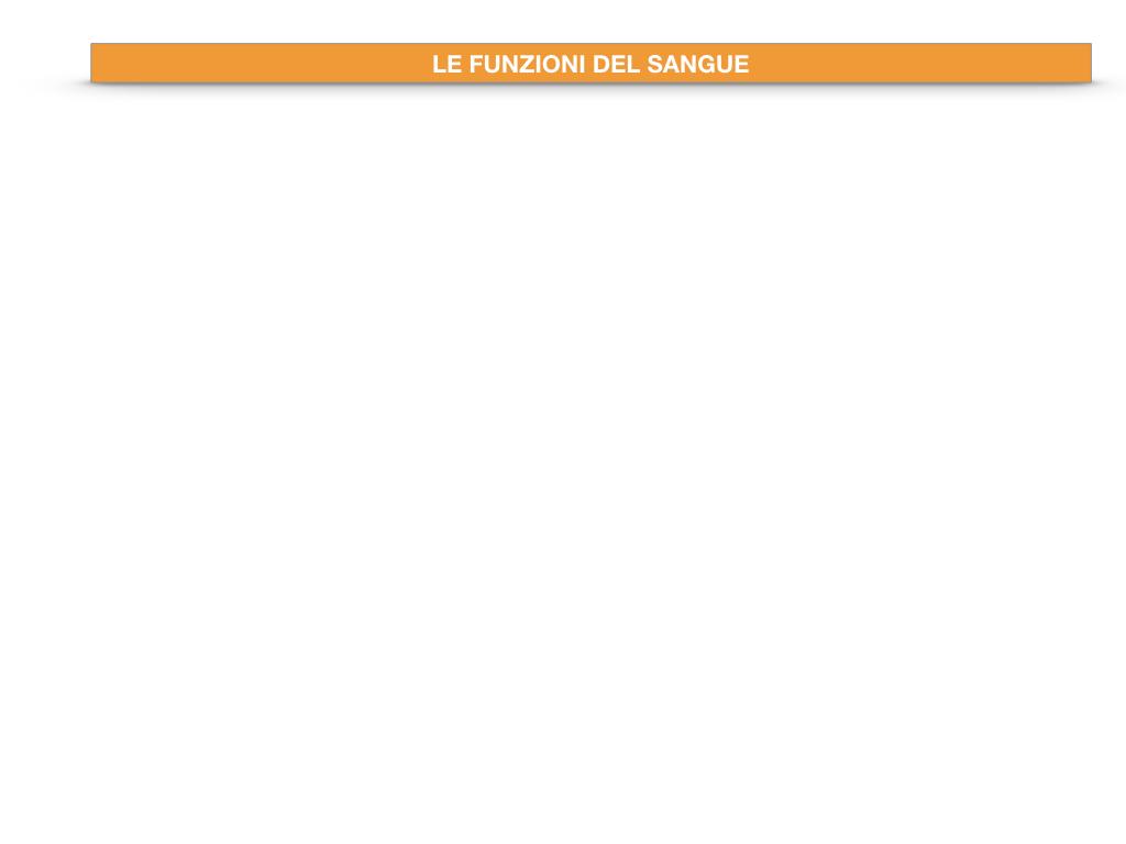 13. CIRCOLAZIONE E DIFESE_SIMULAZIONE.038