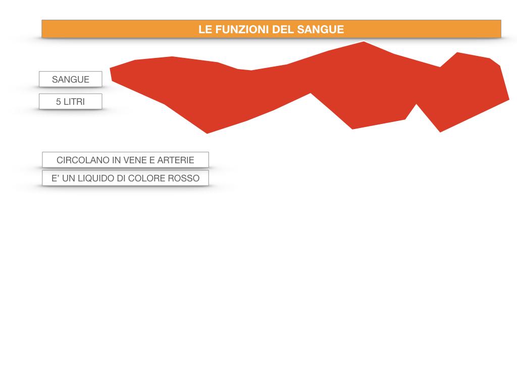 13. CIRCOLAZIONE E DIFESE_SIMULAZIONE.042